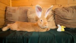 big-bunny-2