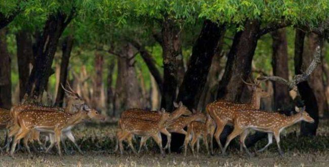 シュンドルボンについて シュンドルボンはベンガル湾に浮かぶ低地の島々の集まりで、インドとバングラデシュに広がり、独特のマングローブ林で有名です。 このアクティブなデルタ地域は、世界最大の地域の1つであり、面積は約40,000平方キロメートルです。 シュンドルボンの森は、インドとバングラデシュ全体で約10,000平方キロメートルあり、そのうち40%がインドにあり、河口のクロコダイル(Crocodilus porosus)、ロイヤルベンガルタイガー(Panthera tigris)など、世界的に脅威にさらされている珍しい野生生物が数多く生息しています。 ミズオオトカゲ(Varanus salvator)、ガンジスイルカ(Platinista gangetica)、ヒメウミガメ(Lepidochelys olivacea)。 インドの森林は、スンダルバンスタイガーリザーブと24パルガナー(南)森林課に分かれており、バングラデシュの森林と合わせて、トラが見られる世界で唯一のマングローブ林です。 インドのスンダルバンスデルタは、その独特の生物多様性のために、1973年以来WWF-インドの優先地域となっています。 野生のトラやその他の野生生物のかなりの数を支えている一方で、450万人以上が住む、生態学的に脆弱で気候的に脆弱な地域でもあります。 スンダルバンの未来、その生物多様性と人々を確保するには、持続可能な生計の確保、クリーンで持続可能なエネルギーへのアクセス、効果的な人間の野生生物の紛争管理などの短期的な介入とともに、気候適応と保全戦略を統合できる長期ビジョンが必要です。 この景観に対するWWF-インドのビジョンは、生物多様性、生態系サービス、持続可能な開発をサポートする気候に強いスンダルバンを開発することです。 シュンドルボンのWWF-インドの歴史 1973年:プロジェクトタイガーの開始以来、シュンドルボンに参加。 1974年に野良トラの最初の静穏化でスンダルバンス森林局を支援しました。 1976年:インドのネイチャークラブなどのイニシアチブを通じて環境教育活動を実施。 森林資源への依存を減らすための設備とトレーニング、およびコミュニティの関与により、森林局を支援しました。 2007年:生物多様性の保全と気候変動の問題に対処するために、専用のシュンドルボンプログラムを設立しました。 景観戦略は、生物多様性保全、気候変動への適応、エネルギーアクセスの3つのテーマ分野に焦点を当てました。